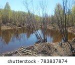 A Broken Beaver Dam Destroyed ...