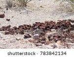 Many Rusty Cans In The Desert...