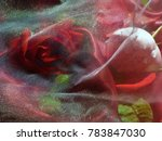 scarlet and white roses  under...   Shutterstock . vector #783847030