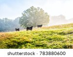 silhouette of three black cows... | Shutterstock . vector #783880600