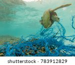 Stock photo green sea turtle entangled in a discarded fishing net 783912829