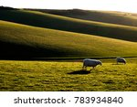 sussex rolling hills with two... | Shutterstock . vector #783934840