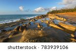 shore acres state park is a...   Shutterstock . vector #783939106