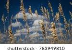 golden dune grass waves in the... | Shutterstock . vector #783949810