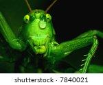 Tear Of Beauty Grasshopper...