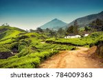 munnar  kerala  india   october ... | Shutterstock . vector #784009363