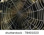 cobwebs in the dew | Shutterstock . vector #78401023