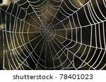 cobwebs in the dew | Shutterstock . vector #78401023