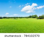 Green Meadow And Trees...