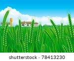 Grain Fields. Summer Landscape...