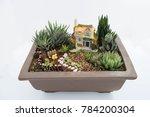 succulent plants arrangment of...   Shutterstock . vector #784200304
