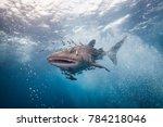 whale shark coming | Shutterstock . vector #784218046