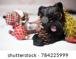 the belgian griffon in glasses | Shutterstock . vector #784225999