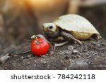 elongated tortoise in the... | Shutterstock . vector #784242118