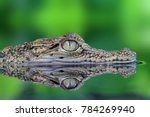 Small photo of Crocodile, Crocodile in reflection