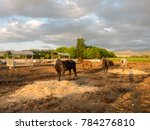 horse on a farm | Shutterstock . vector #784276810