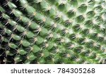 Up Close View Of Cactus Needle...