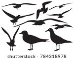 set of sea gull silhouette ... | Shutterstock .eps vector #784318978