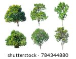 isolated tree set | Shutterstock . vector #784344880