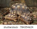 close up african spurred... | Shutterstock . vector #784354624