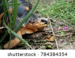 portrait of radiated tortoise... | Shutterstock . vector #784384354