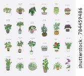home indoor plants vector hand... | Shutterstock .eps vector #784459486