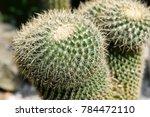 closeup of cactus | Shutterstock . vector #784472110
