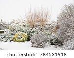 Winter Garden Border With...