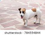 Portrait Of A Dog On A Pavemen...