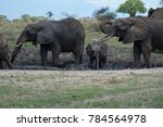A Family Of Elephants Cooling...