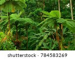 rainforest  far north... | Shutterstock . vector #784583269