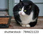 Stock photo black and white cat with green eyes watches things from the porch 784621123