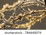 winter magic. stems of nettle... | Shutterstock . vector #784640074