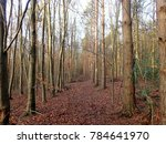 Small photo of Woodland Firebreak, Philipshill Wood, Chorleywood
