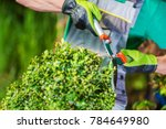 Spring Plants Trimming by Professional Caucasian Gardener. - stock photo