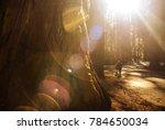 Exploring World Famous Sequoia...