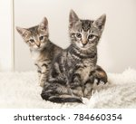two cute tabby baby cats... | Shutterstock . vector #784660354