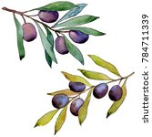 olive tree in a watercolor...   Shutterstock . vector #784711339