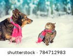 Dog And Cat  Wearing Scarf ...