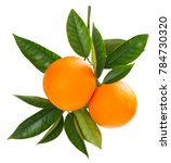 Two Orange Fruits Hanging On A...