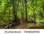 original forest landscape | Shutterstock . vector #784806940
