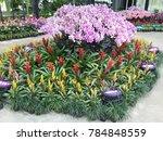 modern garden design | Shutterstock . vector #784848559