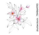 flower drawing sketch.... | Shutterstock . vector #784864990