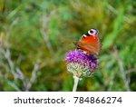 european common peacock... | Shutterstock . vector #784866274
