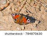 european common peacock... | Shutterstock . vector #784870630