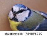 eurasian blue tit bird | Shutterstock . vector #784896730