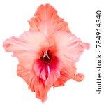 One Bud Of Gladiolus Coral Or...