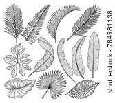 Floral Hand Drawn Pictures Of...
