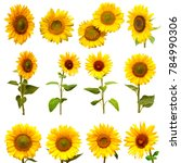 Sunflowers Collection White Background Yellow - Fine Art prints