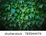 Ivy On The Wall. Background....